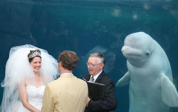 O balena beluga a fost martora la o nunta si imaginea a devenit virala pe internet. E cel mai celebru meme pe saptamana asta FOTO