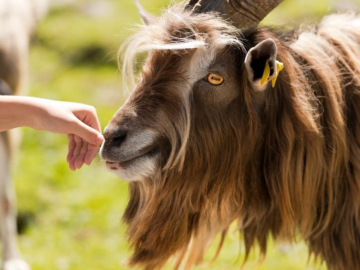 Cele mai ridicole 10 fobii ale oamenilor: teama de blana de animale, frica de cuvinte lungi sau de a... trece strada!