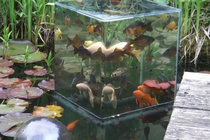 Stai la curte si ai iaz? Cum iti faci un acvariu inedit, chiar in gradina! Copiii vor fi incantati VIDEO