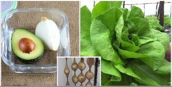 10 trucuri pentru a pastra prospetimea fructelor si legumelor mai mult timp