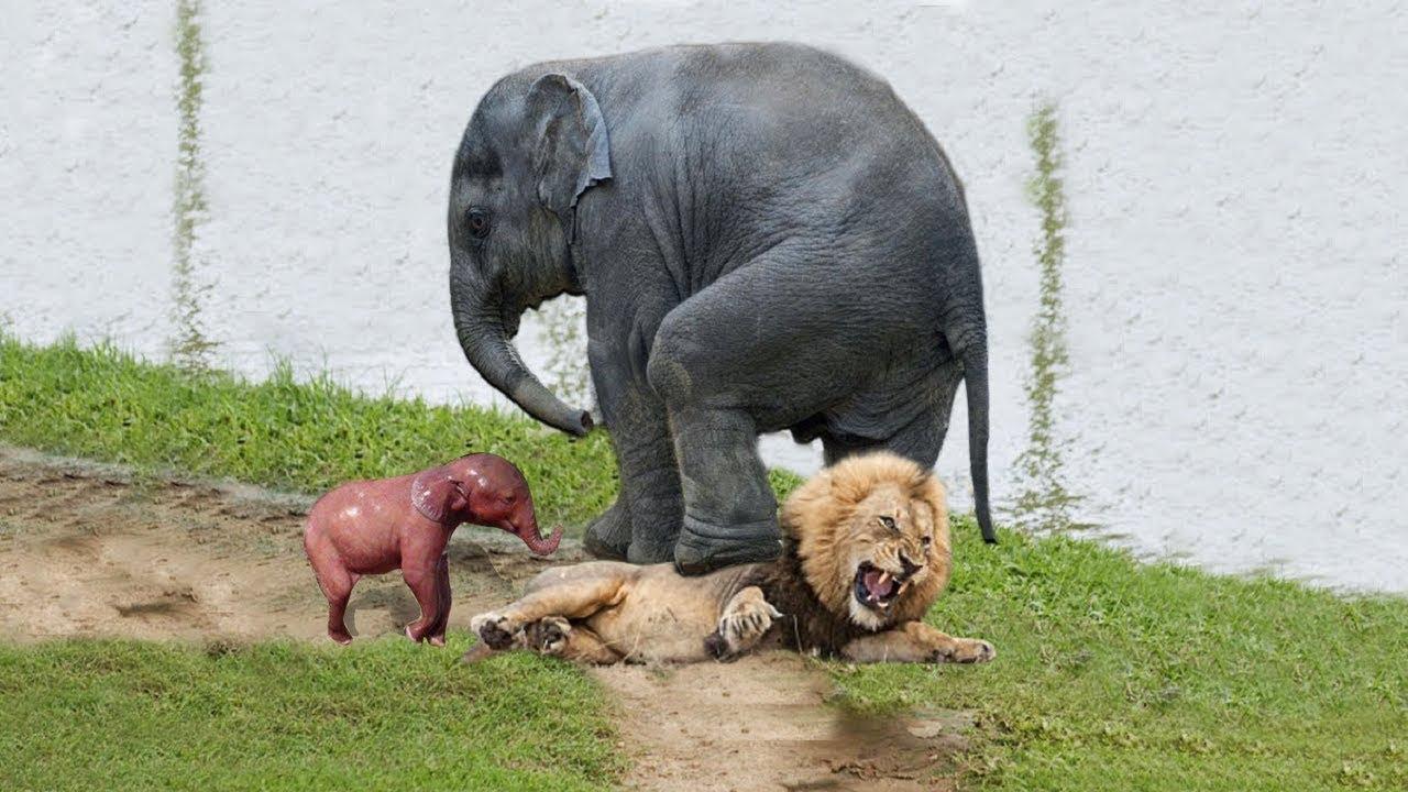 Terra a pierdut 60% dintre animalele sălbatice, în ultimii 44 de ani