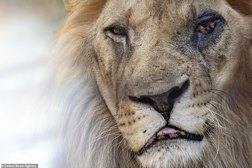 VIDEO Animale salvate de la Gradina Zoologica erau maltratate si tinute in conditii greu de imaginat