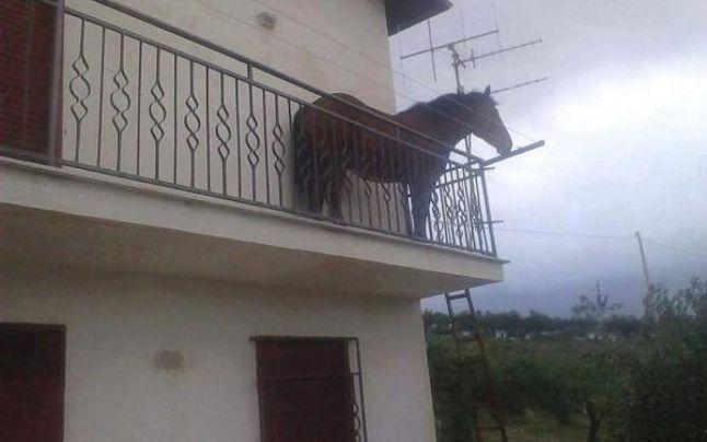 Si-a parcat calul pe balcon. Imaginea din Cluj care s-a viralizat imediat