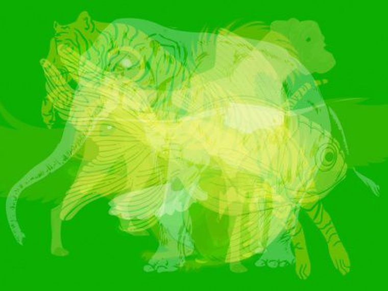 Test de personalitate. Primul animal pe care il vezi in poza spune TOTUL despre tine!