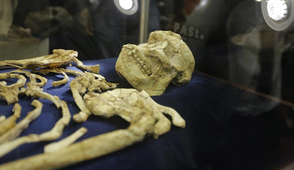 A fost descoperita o noua subspecie umana