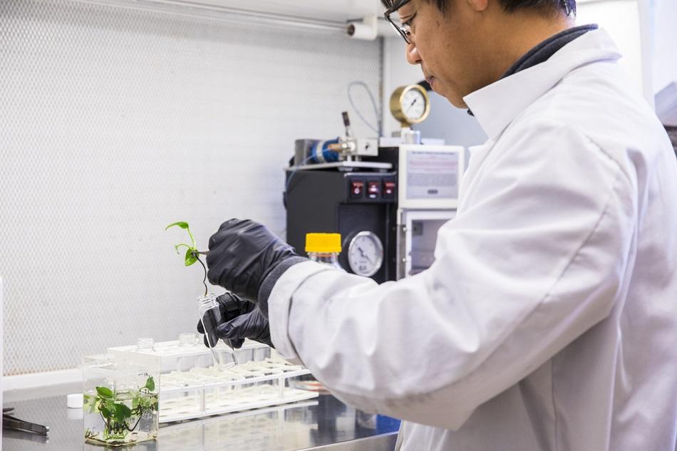 Cea mai noua planta curata aerul din locuinta