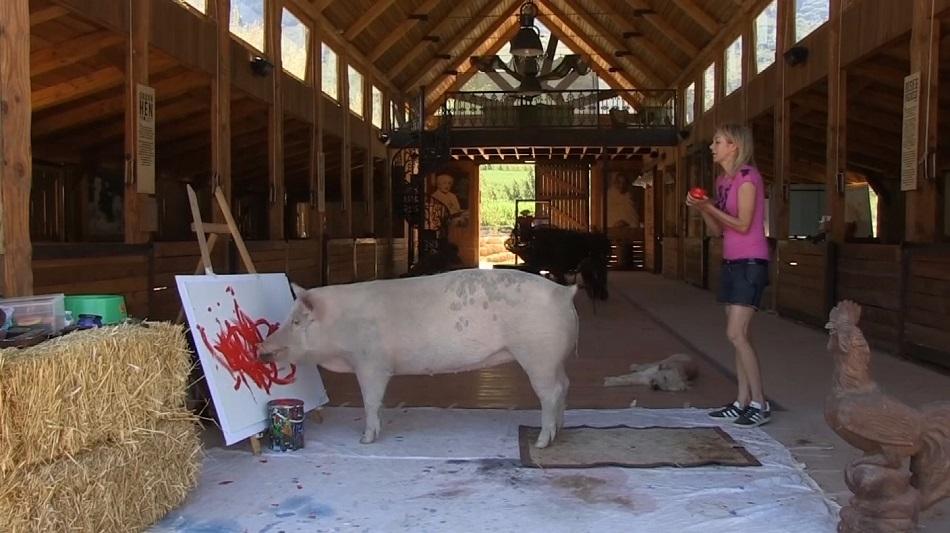 aceti cunostinta cu Pigcasso, porcul care picteaza