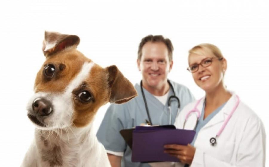Sterilizare gratuită pentru câini și pisici, in București. Cine beneficiaza de program