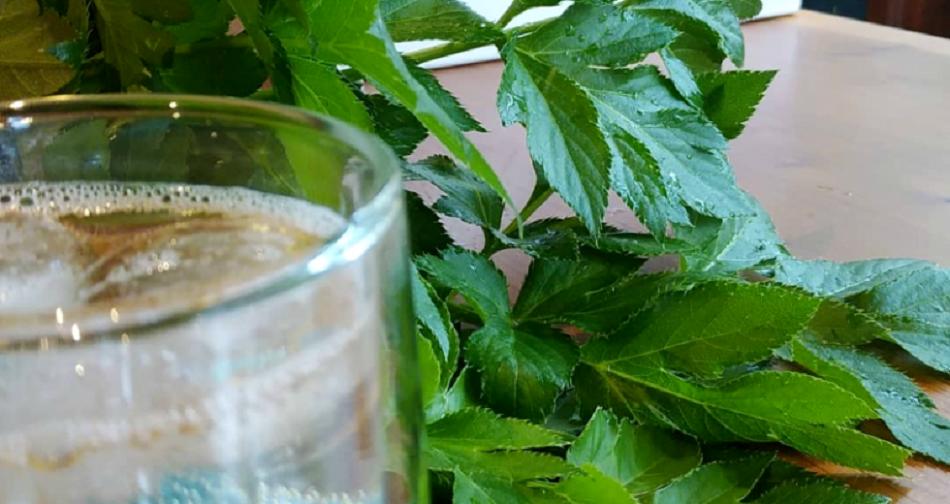 Elixirul tineretii, descoperit intr-o planta