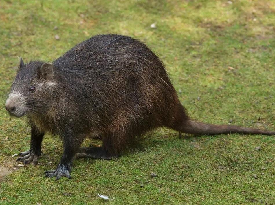 Trei noi specii de mamifere, descoperite de specialisti