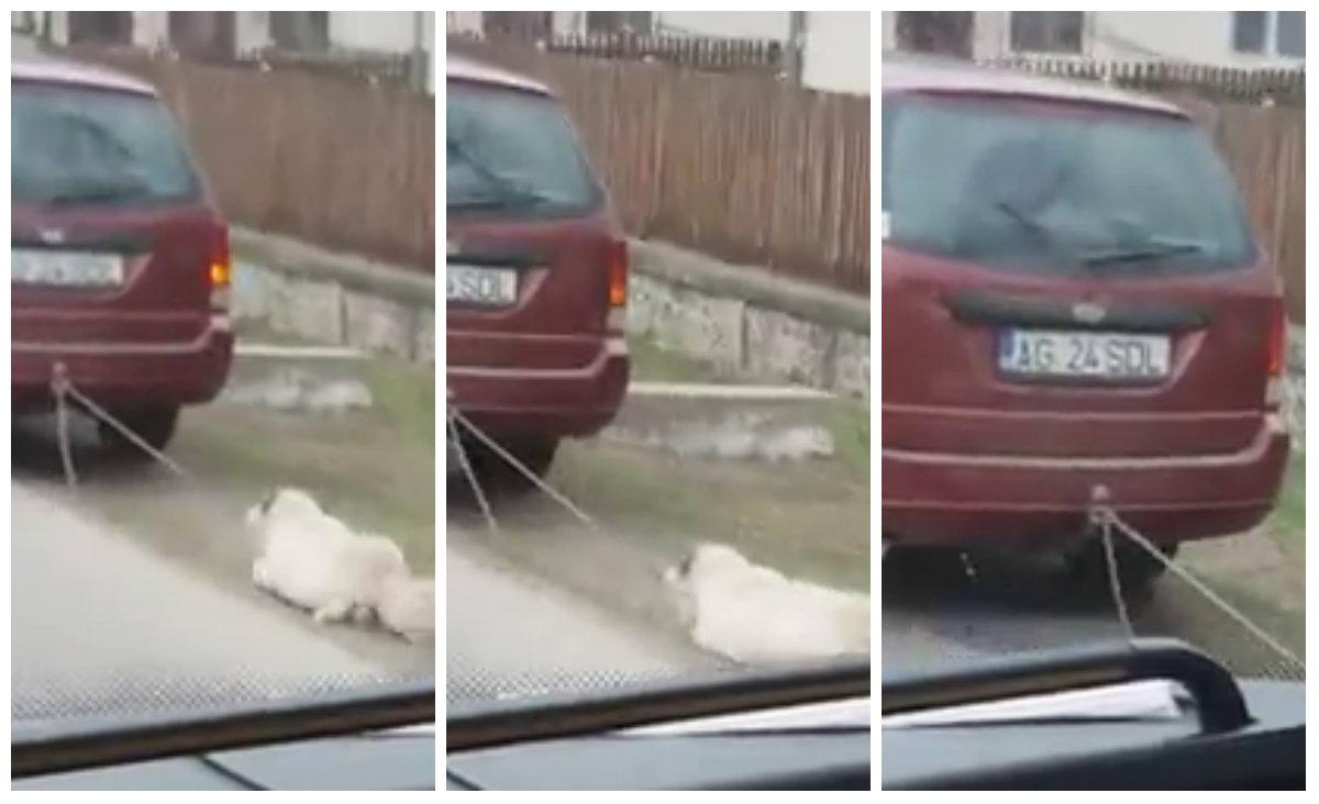 Un viceprimar a TRAS un caine cu masina!