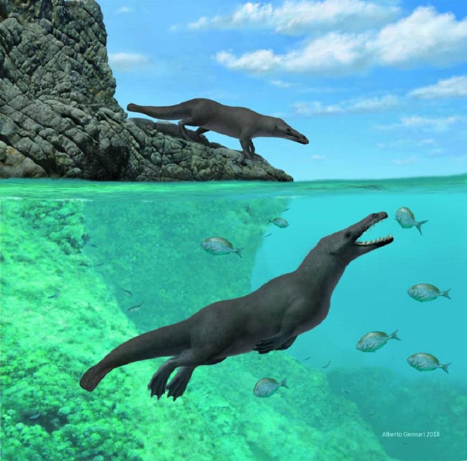 Balena cu patru picioare, descoperita in Peru