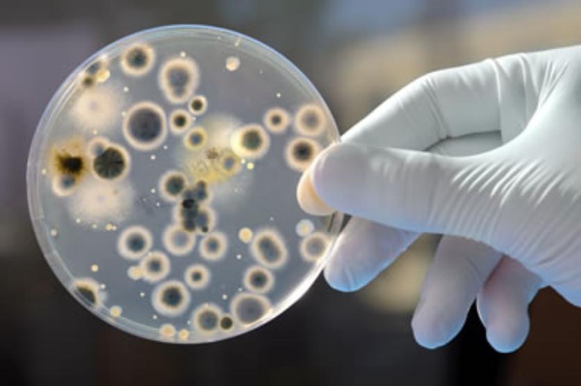 Candida auris, ciuperca molipsitoare care ne afecteaza din ce in ce mai des! Ce este