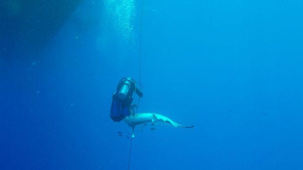 Un scufundator a fost atacat de un rechin