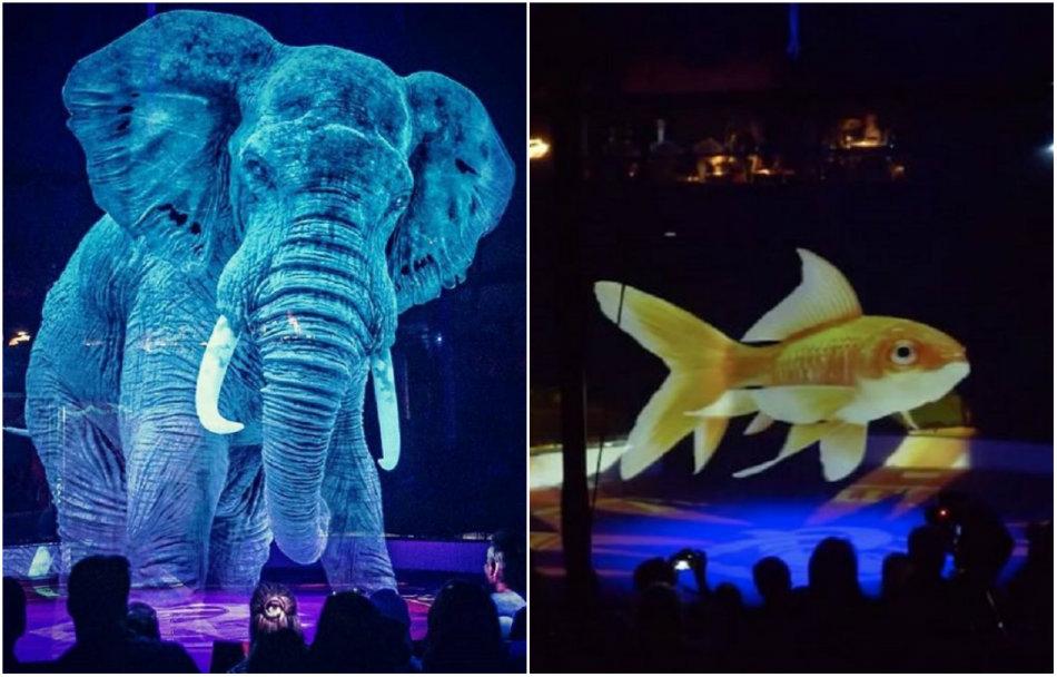 animale inlocuite cu holograme