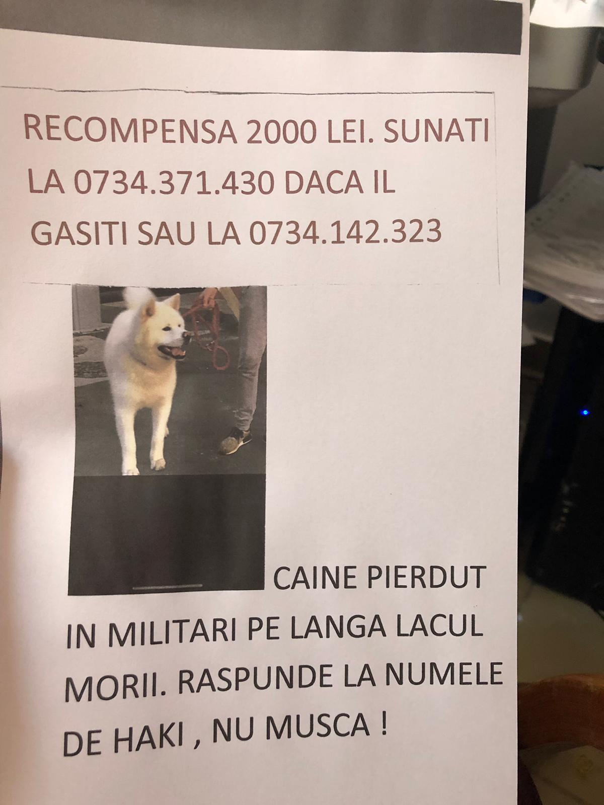 Recompensa URIASA pentru un caine pierdut in Bucuresti