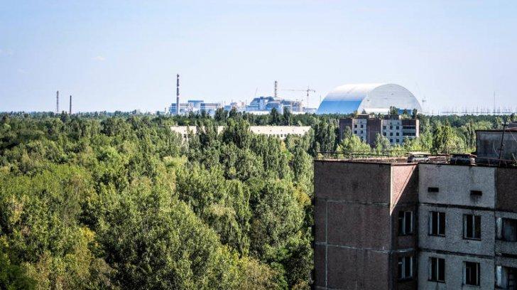 Ce s-a întâmplat cu plantele la Cernobîl după dezastrul nuclear! Este un fenomen uluitor