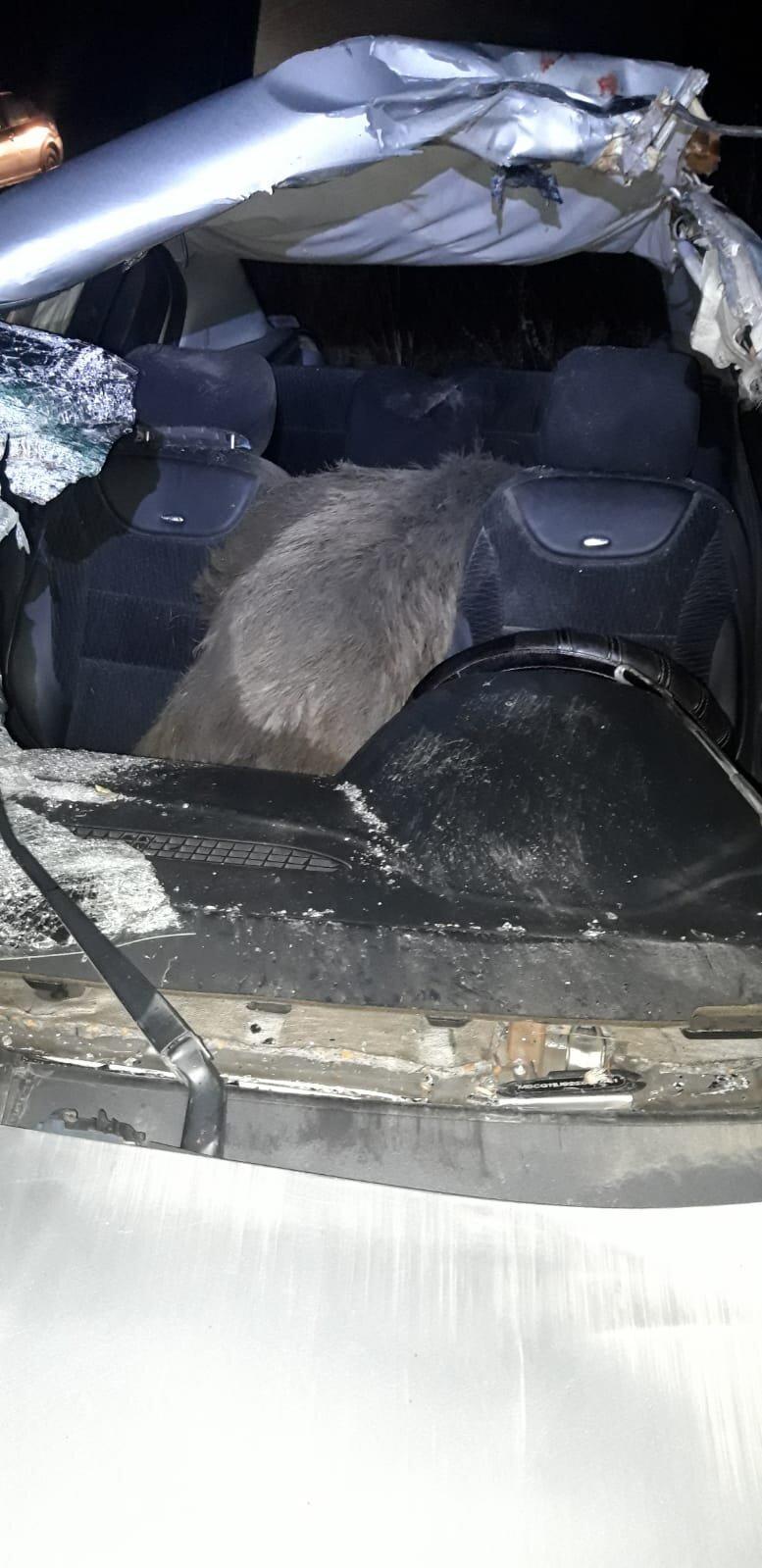 Mistreț proiectat într-o mașină