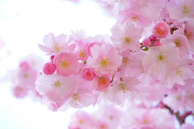 Duminica Floriilor. Tradiții și obiceiuri. Ce români își sărbătoresc onomastica